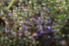 Γλυκό bokeh Ταπετσαρία σύστασης φύσης θαμπάδων bokeh Στοκ εικόνες με δικαίωμα ελεύθερης χρήσης