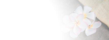 Γλυκό plumeria χρώματος στο μαλακό και ύφος θαμπάδων στη σύσταση εγγράφου μουριών για το υπόβαθρο Στοκ φωτογραφίες με δικαίωμα ελεύθερης χρήσης