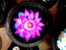 Γλυπτικές λουλουδιών σαπουνιών Στοκ φωτογραφία με δικαίωμα ελεύθερης χρήσης