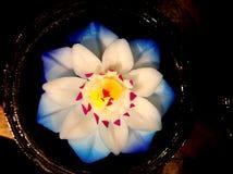Γλυπτικές λουλουδιών σαπουνιών Στοκ Εικόνες