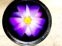Γλυπτικές λουλουδιών σαπουνιών Στοκ Εικόνα