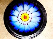 Γλυπτικές λουλουδιών σαπουνιών Στοκ εικόνες με δικαίωμα ελεύθερης χρήσης