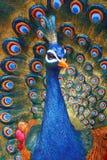 Γλυπτό Peacock στοκ φωτογραφίες με δικαίωμα ελεύθερης χρήσης