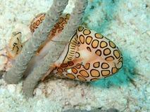 Γλώσσα Key West Φλώριδα φλαμίγκο Στοκ φωτογραφίες με δικαίωμα ελεύθερης χρήσης