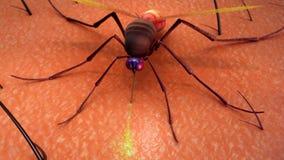 Δάγκωμα κουνουπιών Στοκ Φωτογραφία
