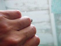 Δάγκωμα κουνουπιών Στοκ φωτογραφία με δικαίωμα ελεύθερης χρήσης