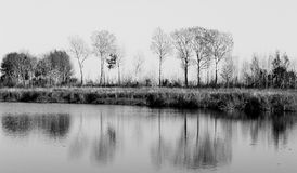 Δάση από τη λίμνη Στοκ Εικόνα