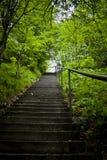 δάση βημάτων Στοκ Εικόνες