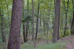 Δάση γύρω από το χωριό - PoÄ  úvadlo Στοκ φωτογραφίες με δικαίωμα ελεύθερης χρήσης