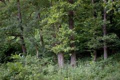 Δάση γύρω από το χωριό - PoÄ  úvadlo Στοκ Φωτογραφίες