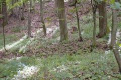 Δάση γύρω από το χωριό - PoÄ  úvadlo Στοκ εικόνα με δικαίωμα ελεύθερης χρήσης