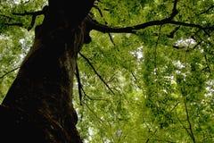 Δάση γύρω από το χωριό - PoÄ  úvadlo Στοκ Εικόνα