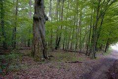 Δάση γύρω από το χωριό - PoÄ  úvadlo Στοκ φωτογραφία με δικαίωμα ελεύθερης χρήσης