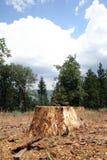 δάση δέντρων κολοβωμάτων Στοκ φωτογραφίες με δικαίωμα ελεύθερης χρήσης