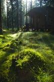 δάση εξοχικών σπιτιών στοκ φωτογραφίες