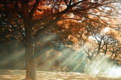 δάση ζωνών πράσινα Στοκ εικόνα με δικαίωμα ελεύθερης χρήσης