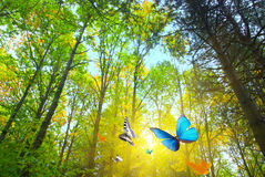 δάση ηλιοφάνειας