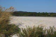 δάση θάλασσας Στοκ Εικόνες