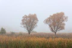 Δάση λιβαδιών τοπίων φθινοπώρου πρωινού Στοκ φωτογραφία με δικαίωμα ελεύθερης χρήσης