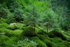 δάση ιστορίας Στοκ φωτογραφία με δικαίωμα ελεύθερης χρήσης