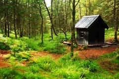 δάση καμπινών Στοκ φωτογραφίες με δικαίωμα ελεύθερης χρήσης