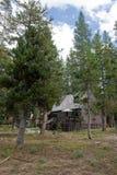 δάση καμπινών Στοκ φωτογραφία με δικαίωμα ελεύθερης χρήσης