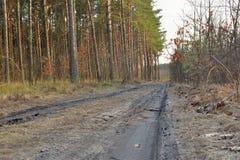 δάση μονοπατιών Στοκ φωτογραφίες με δικαίωμα ελεύθερης χρήσης