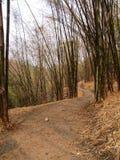 Δάση μπαμπού Στοκ Φωτογραφία