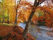 δάση Νοεμβρίου οξιών Στοκ εικόνες με δικαίωμα ελεύθερης χρήσης