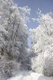 δάση οδικών χιονώδη γουρνώ& Στοκ Φωτογραφία