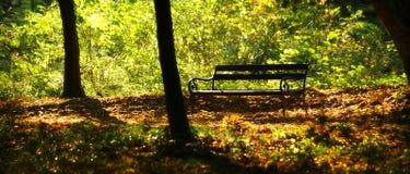 δάση πάγκων Στοκ φωτογραφία με δικαίωμα ελεύθερης χρήσης