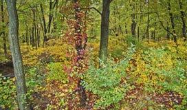 δάση πανοράματος φθινοπώρου στοκ φωτογραφίες με δικαίωμα ελεύθερης χρήσης