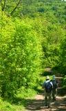 δάση πρεσβυτέρων Στοκ Εικόνες