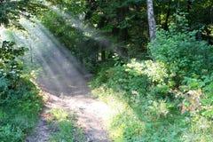 δάση πρωινού Στοκ εικόνα με δικαίωμα ελεύθερης χρήσης