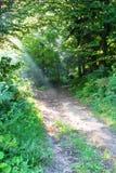 δάση πρωινού Στοκ Εικόνες
