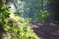 δάση πρωινού Στοκ εικόνες με δικαίωμα ελεύθερης χρήσης