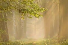δάση πρωινού Στοκ Εικόνα