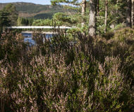 Δάση στη Σκωτία Στοκ Φωτογραφία