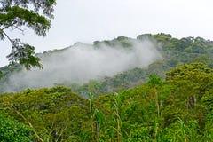 Δάση σύννεφων στα βουνά στοκ εικόνα με δικαίωμα ελεύθερης χρήσης