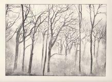 δάση χαρακτικής διανυσματική απεικόνιση