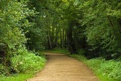 δάση Στοκ Εικόνες