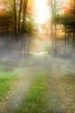δάση Στοκ εικόνες με δικαίωμα ελεύθερης χρήσης