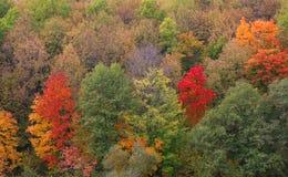 Δάσος аutumn Στοκ Εικόνα