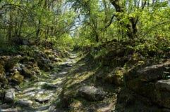 Δάσος άνοιξη - η πορεία σχεδιάζεται με τις πέτρες βρύου Στοκ φωτογραφία με δικαίωμα ελεύθερης χρήσης