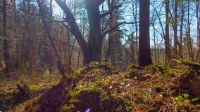 Δάσος άνοιξη και λουλούδια, χρόνος-σφάλμα με το γερανό φιλμ μικρού μήκους
