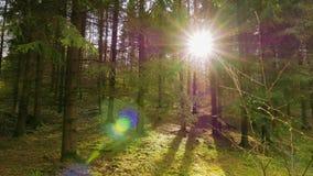 Δάσος άνοιξη και ο ήλιος απόθεμα βίντεο