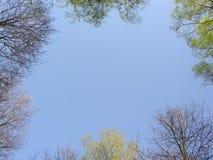 δάσος άνοιξη ουρανού Στοκ φωτογραφίες με δικαίωμα ελεύθερης χρήσης