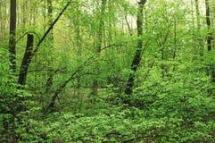 Δάσος άνοιξη στην περιοχή της Μόσχας Στοκ εικόνες με δικαίωμα ελεύθερης χρήσης