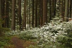 Δάσος άνοιξη στο ελαφρύ χιόνι Στοκ φωτογραφία με δικαίωμα ελεύθερης χρήσης