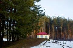 Δάσος, άποψη από τη να κάνει σκι διαδρομή, Gorodok Στοκ Εικόνα